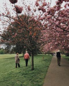 eldery people in park trees blossoming